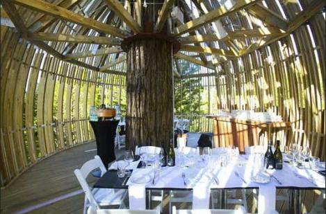 En el corazón de un árbol, formas orgánicas, una de las muchas tendencias en interiorismo para restaurantes, bares y cafeterías